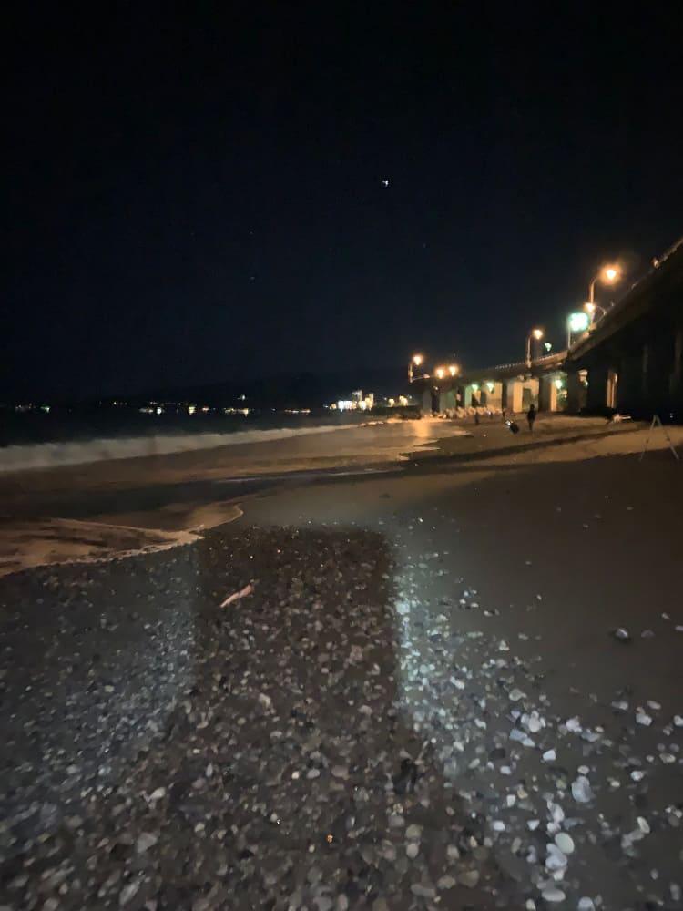 国府津 夜釣り
