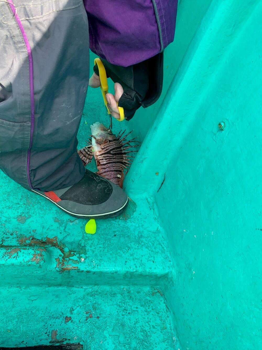 千葉 高崎港 船釣り ミノカサゴ