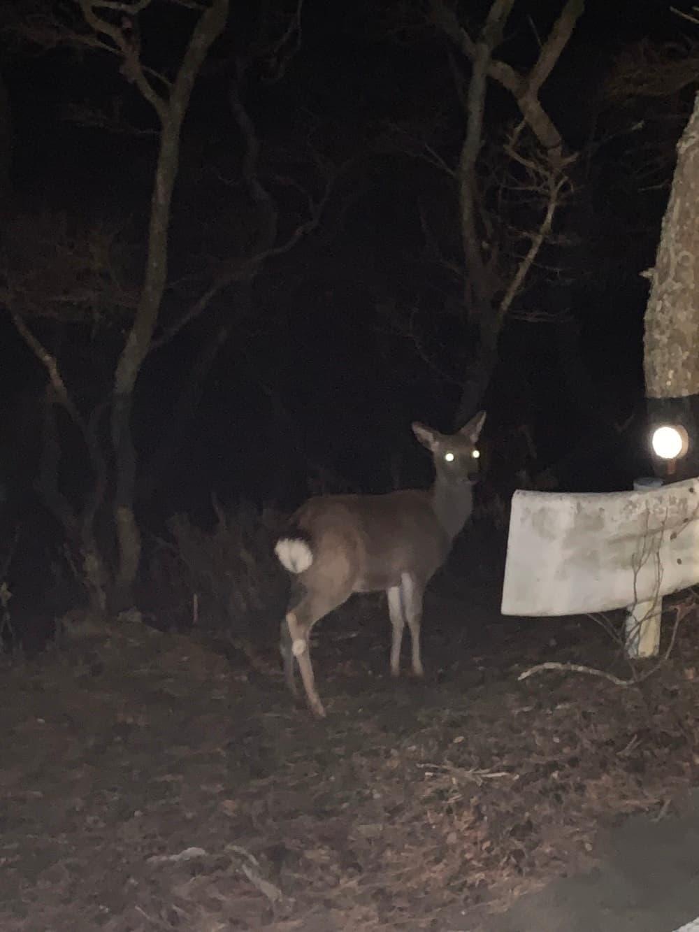 戸田灯台 鹿
