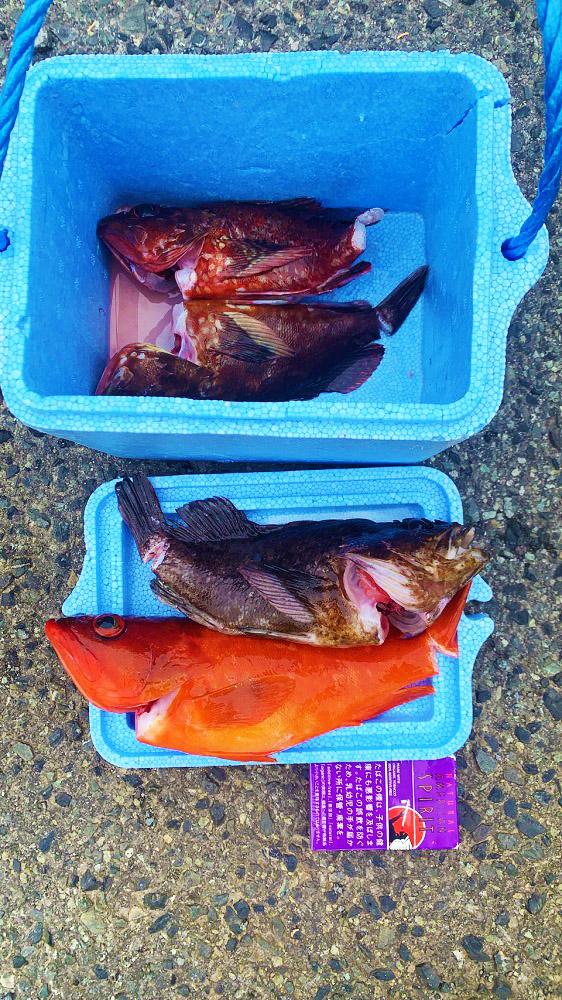 クロソイ、カサゴ、アカハタ 根魚