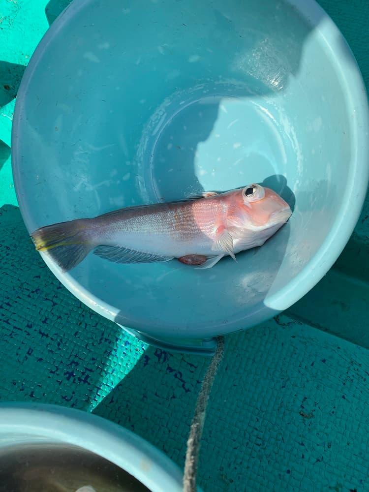 千葉 高崎港 船釣り情報 後半|カワハギ アマダイ釣果情報
