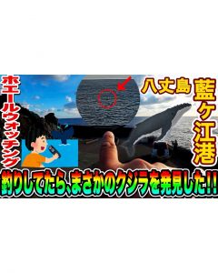 【ホエールウォッチング】釣りしてたら、まさかのクジラを発見した!! in 八丈島 藍ヶ江港