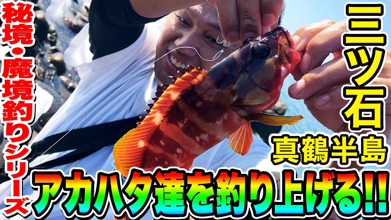 【真鶴半島 三ツ石】アカハタ達を釣り上げる!!